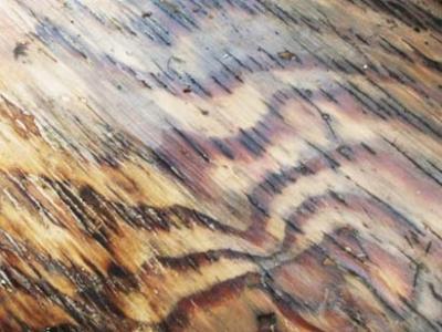 Weyerhauser, hiring, engineered lumber plants, Louisiana, La., Arkansas, Ark.